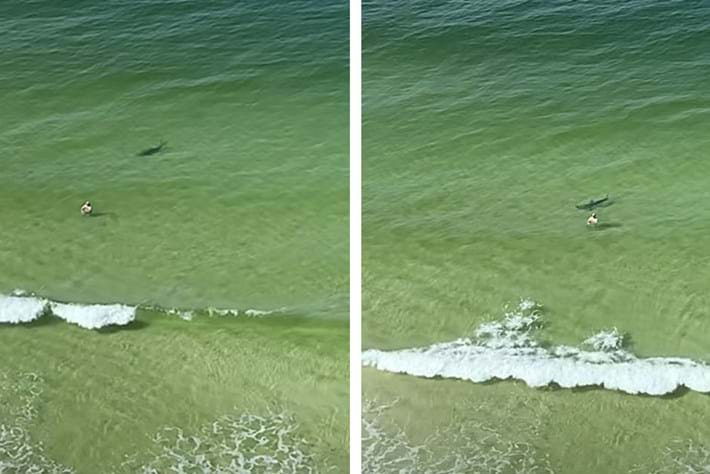 Watch: Hammerhead shark chases after fish, human gets in the way