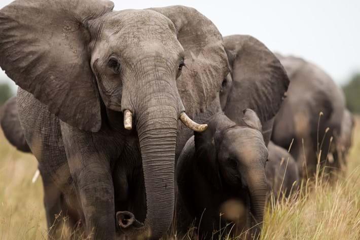 elephant_2021-08-09.jpg