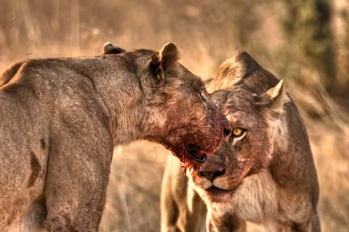 lionesses_2021-08-09.jpg