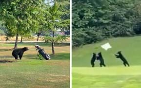 How do you spice up the game of golf? Just add bears.