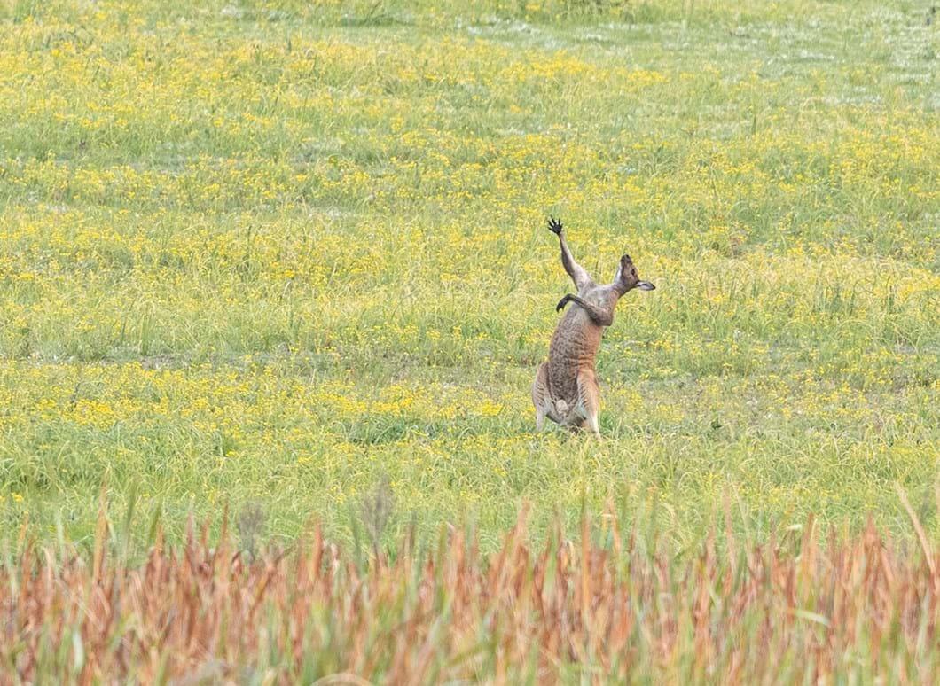 Lea-Scaddan-kangaroo-funny_2021-09-02.jpg