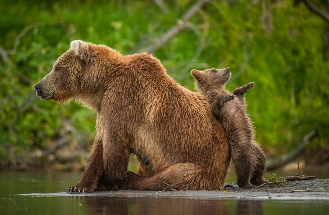 Andy-Parkinson-bears-leaning-post_2021-09-02.jpg