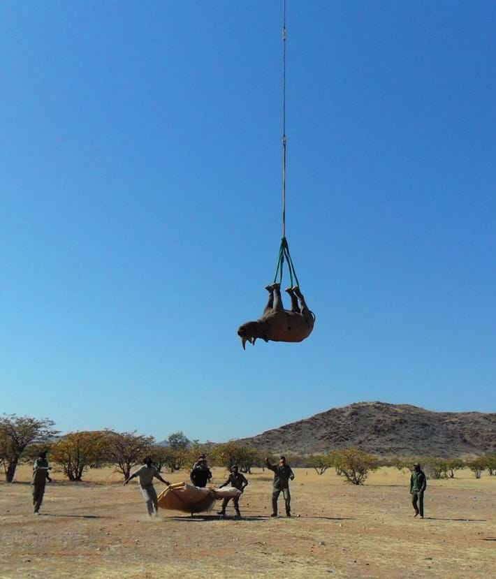 rhino-dangling_2021-09-17.jpg