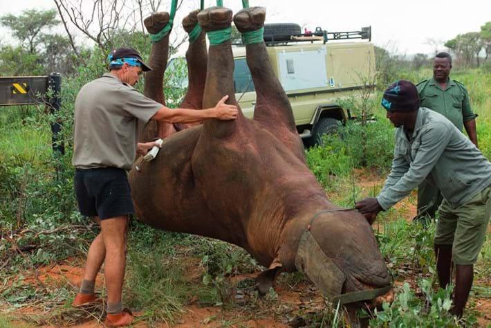 rhino-dangling-low_2021-09-17.jpg
