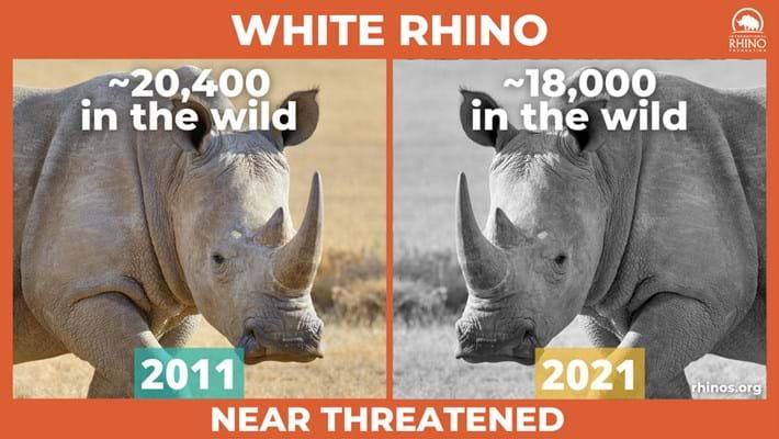 white-rhino-stats_2021-09-22.jpg