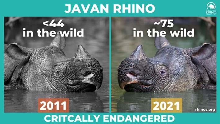 javan-rhino-stats_2021-09-22.jpg
