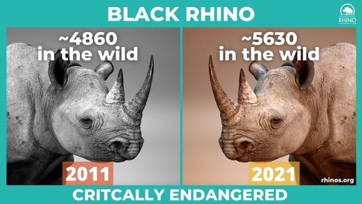 black-rhino-stats_2021-09-22.jpg