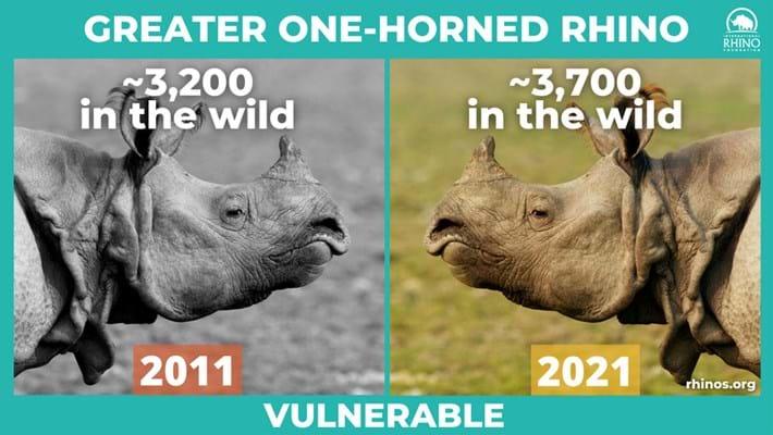 greater-one-horned-rhino-stats_2021-09-22.jpg