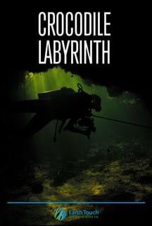 Crocodile Labyrinth