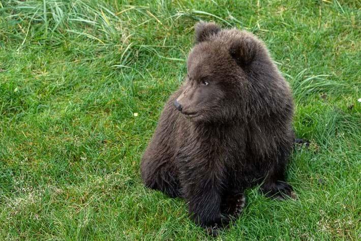 bear-cub-132_2021-10-01.jpg