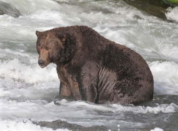 bear-747_2021-10-01.jpg