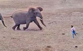 Watch: Charging elephants send tourists scampering for safety