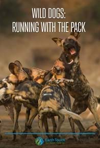 Wild Dogs: Running with the Pack