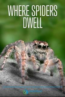 Where Spiders Dwell