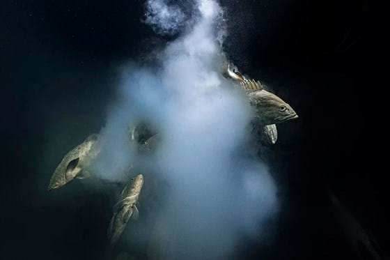 Explosive underwater scene wins top spot at 2021 Wildlife Photographer of the Year competition