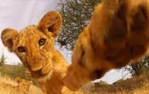 7 animal/GoPro gems that will make your day