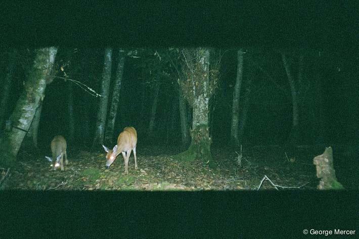 Deer_Camera_Trap