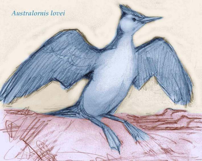 2014 01 29 Australornis Lovei Artists Impression Lr