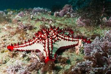 2014 01 31 Starfish