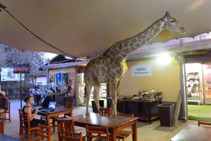 2014 02 04 Giraffe Walks Into A Bar