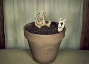 zombie_plant_14_04_2014