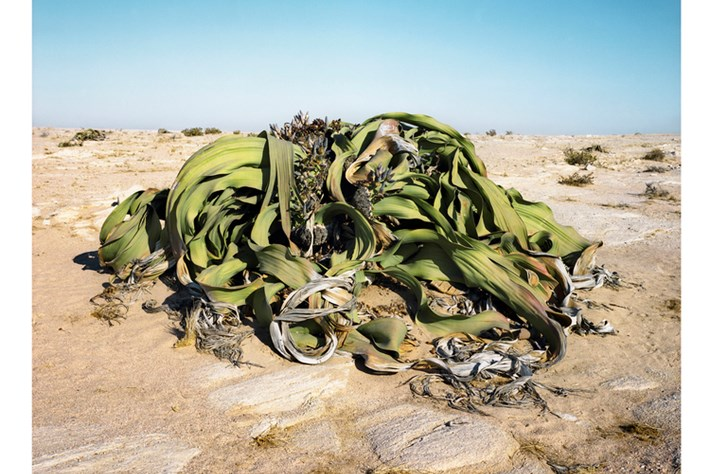 The oldest living things, through a photographer's lens