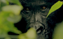 A park in peril: Must-see film tells the story of Congo's Virunga