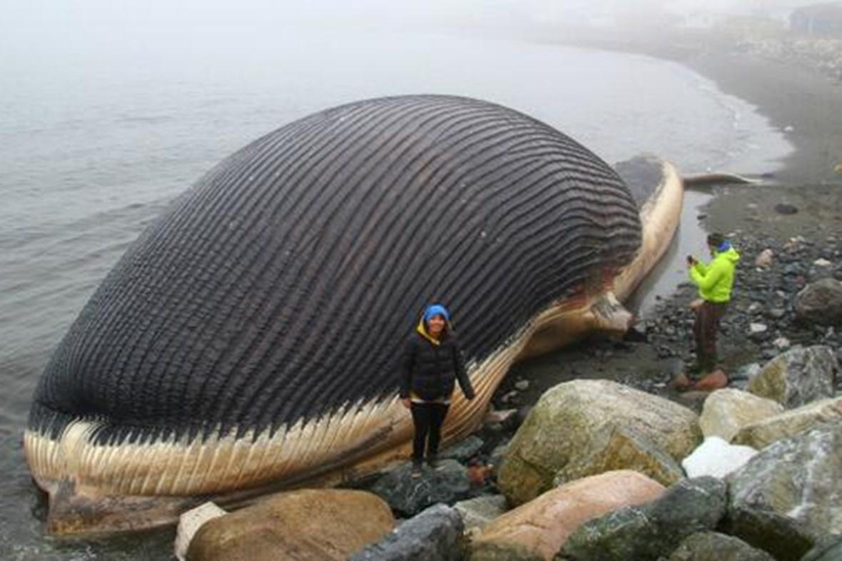 photo sperm whale