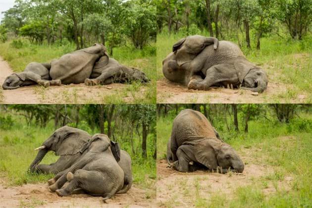 Drunk Elephants Marula 3 2014 05 13