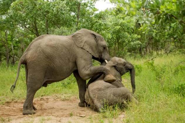Drunk Elephants Marula 2 2014 05 13