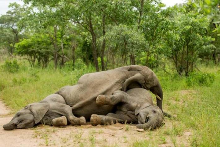 Drunk Elephants Marula 1 2012 05 13