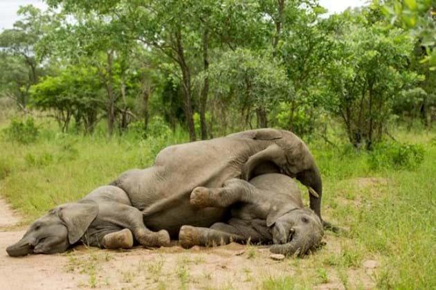 Drunk Elephants Marula 1 2012 05 13