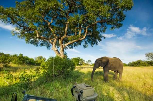 Marula Tree Elephant 2014 05 13