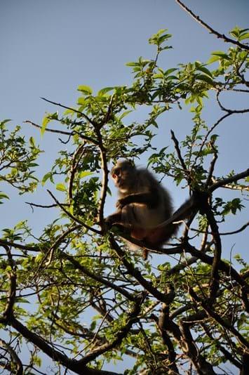 Yakushima Macaque 2014 05 23
