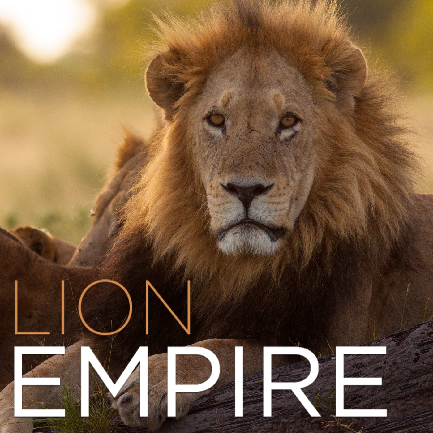 Lion Empire (HD)