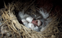 Caught on camera: One of South Africa's rarest birds hatching