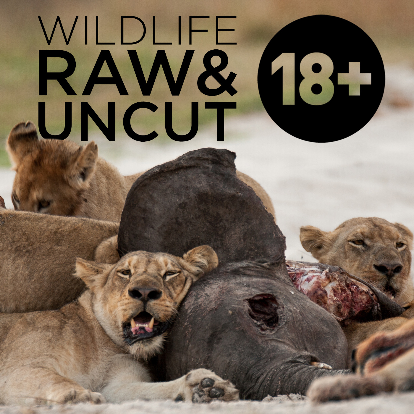 Wildlife: Raw & Uncut (HD)
