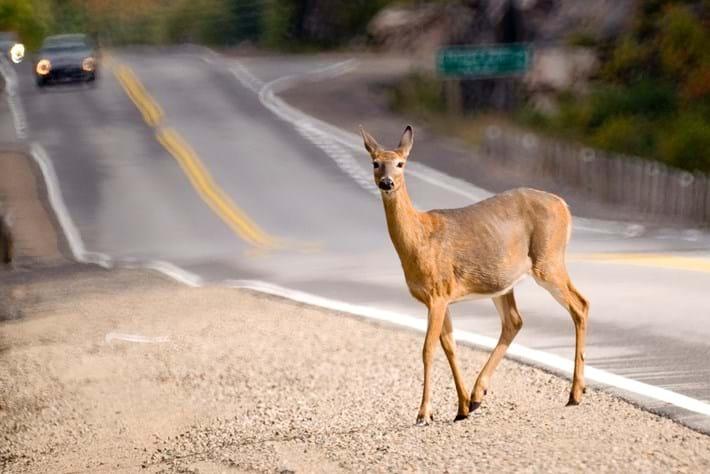 deer road crossing_2014_06_06