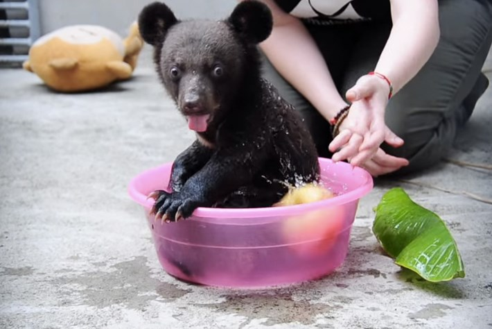 Smudge the bear_1_2014_6_11