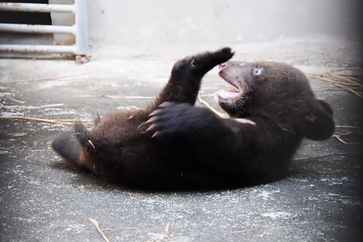 Smudge the bear_2_2014_6_11
