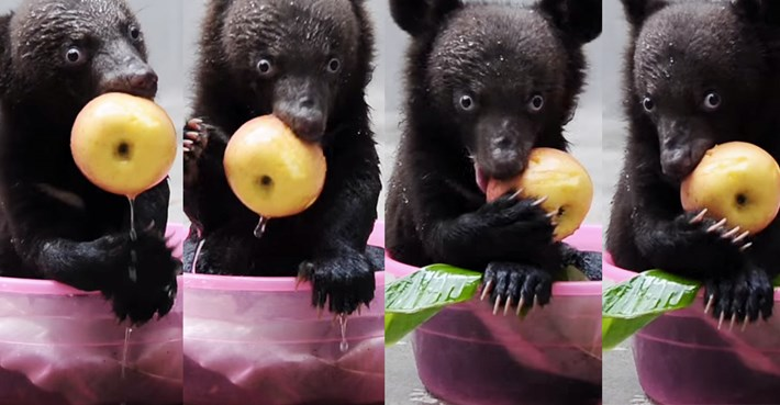 Smudge the bear_4_2014_6_11