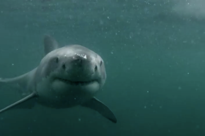 shark encounter_page_2014_6_12
