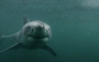 What you can learn from the viral GoPro shark video