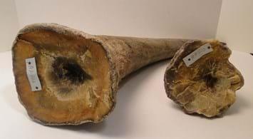 Rhino Horn Reuters 2014 06 12