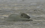 Polar bear PSA highlights the devastating effects of climate change in the Arctic