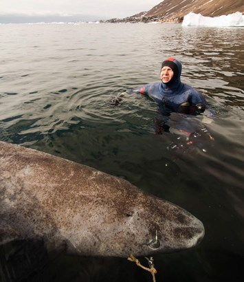 Greenland Shark1