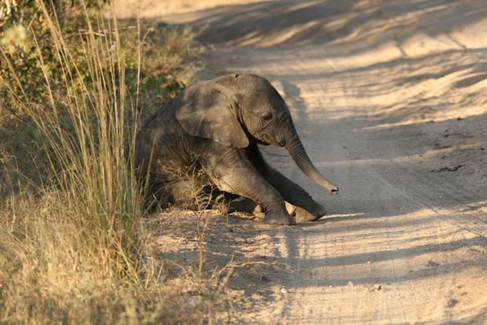 IN PHOTOS: Baby elephant has a hard time getting up