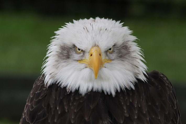 eagle-grumpier-2014-7-4.jpg