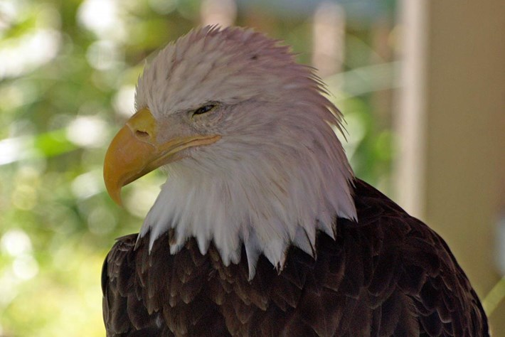 eagle-skeptical-2014-7-4.jpg