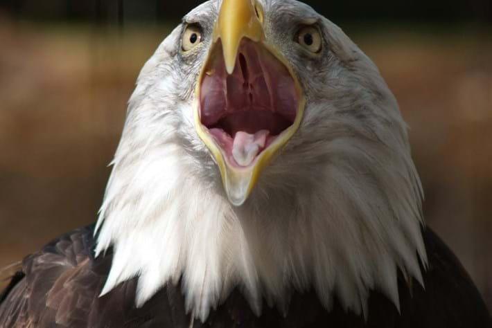 eagle-shocked-2014-7-4.jpg
